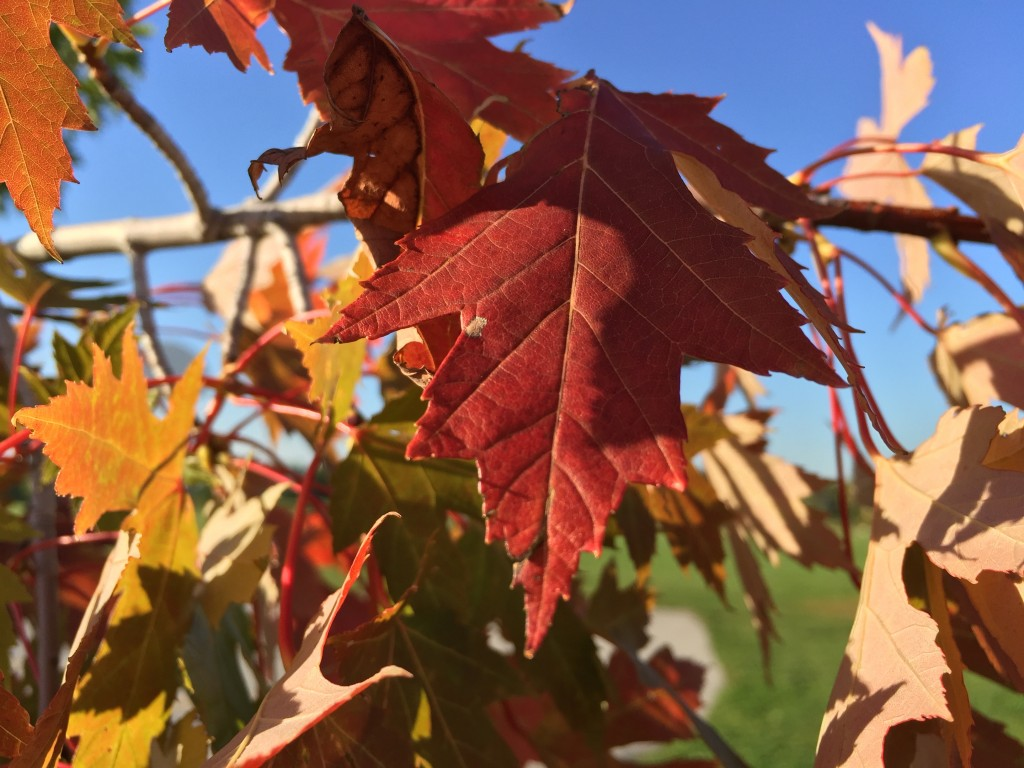 Leaf HDR